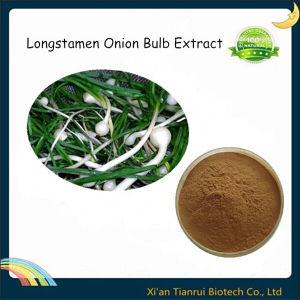 Longstamen Onion Bulb Extract pictures & photos