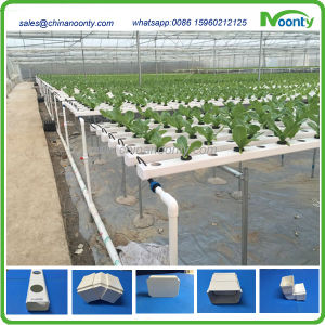 Nft Hydroponics for Lettuce, Cabbage, Herbs, etc Systems pictures & photos