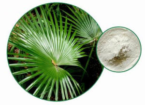 Men′s Health Natural Fatty Acid 15%-85% Saw Palmetto Fruit Extract pictures & photos