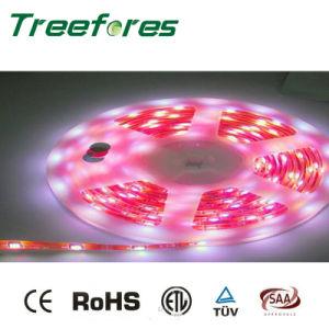 48LED 7W LED Strip Light DC 12V 24V Lighting pictures & photos
