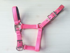High Quality Nylon Webbing Horse Halter pictures & photos