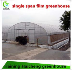 Hot Sales Single Span Film Green House pictures & photos