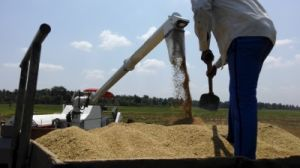 Wishope Big Rice Harvester 4lz-5.0 in Tanzania pictures & photos