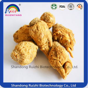 Dried Black Maca Yellow Mama China Supplier pictures & photos