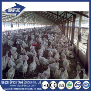 Senegal Light Steel Structure Poultry House/Chicken House pictures & photos