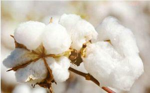 Pure Cotton Sports Towel pictures & photos