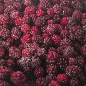 IQF Freezing Organic Blackberry Zl-017