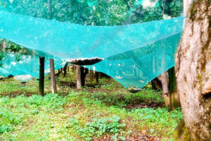 HDPE Agriculture Fruit/ Olive Net/ Harvest Nets/ Collecting Net/ Olive Collect Net pictures & photos