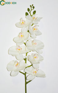Real Touch Artificial Flower Orchid with 9 Heads
