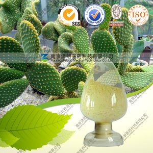 100% Natural High Quality Cactus Extract pictures & photos