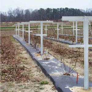 Fiberglass Raspberry Trellis System Agriculture Application pictures & photos