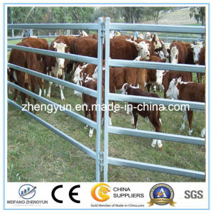 High Quality Galvanized Pipe Horse Fence Panel pictures & photos