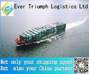Cheap Sea Freight Shipping From China to Havana Manzanillo Ddgk