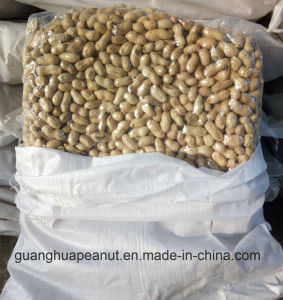 New Crop Seaflower Roasted Peanut in Shell pictures & photos