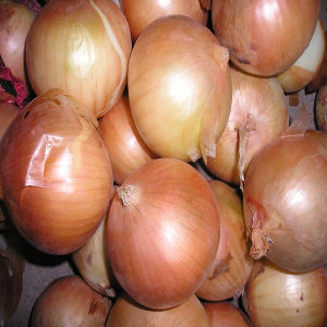 2016 Hot Selling Onion Seeds /Fresh Onion in China pictures & photos