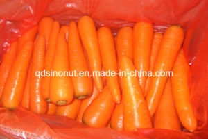New Fresh Carrot (S M L 2L 3L) pictures & photos