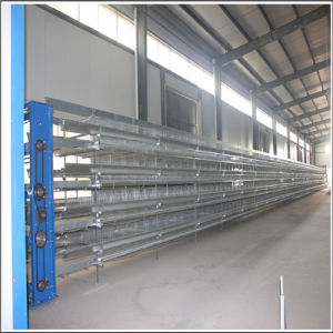 Hot Galvanized Bird Layer Cage for Hot Sale to Africa pictures & photos