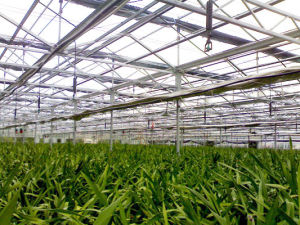 Sp-I-S Hanging Type Sprinkling Irrigation for Horticulture Greenhouse