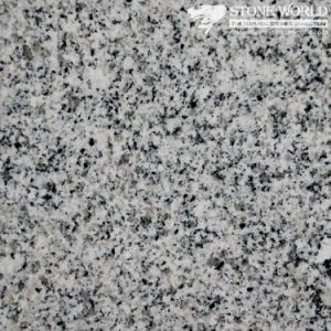 Polished Bianco Gamma G603 Granite Slabs/Tiles for Flooring (MT005) pictures & photos