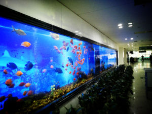 Transparent Cast Acrylic Sheet for Customized Fish Tanks pictures & photos