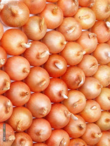 Fresh Yellow Onion with Best Price in China pictures & photos