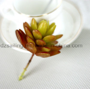 Decorative Plant Natural Touch Artificial Succulents Artificial Flower (SW17669) pictures & photos