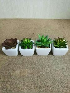 Best Selling Artificial Succulents of Gu809205822 pictures & photos