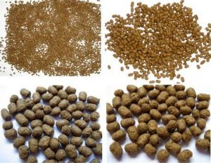 Fish Feed, Fish Meal, Fish Food