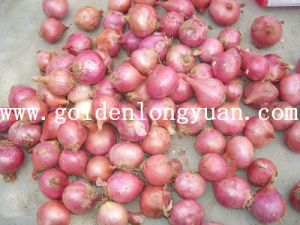 Red Onion pictures & photos