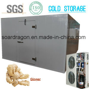 Large Cold Storage for Ginger with Copeland Condensing Unit pictures & photos