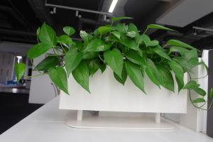 Uispair 100% Steel Square Desktop Flower Pot Garden Planter for Office Garden Hotel Decoration pictures & photos