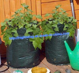 Potato Planter Bag with PP/ PE Grow Bag
