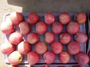 Qinguan Apple/Fresh Apple Wtih High Quality pictures & photos