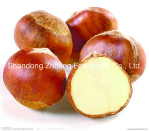 New Crop Chinese Organic Fresh Chestnut pictures & photos