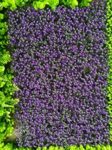 Artificial Plants and Flowers of Artificial Grass Gu20170226095740 pictures & photos