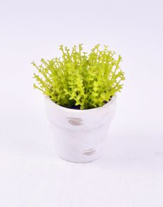 Kinds of Green Artificial Herbs in Paper Mache Pot pictures & photos