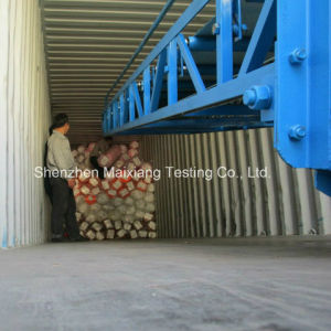 Container Loading Supervision/Container Loading Check/Container Loading Service pictures & photos