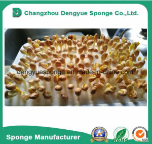 Nursery Lettuce Farming Indoor Hydroponics Seeds Sprout Foam Tray Set pictures & photos