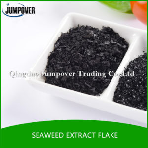 Organic Fertilizerseaweed Extract Promotes Plant Growth pictures & photos