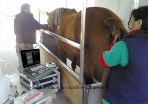 Portable Ultrasound Scanner for Animal Use pictures & photos