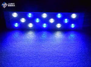 Slim LED Aquarium Light 60cm for Saltwater Reef Tanks pictures & photos