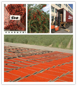 Ningxia Dried Goji Berry (500PCS/50g)