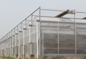 PC Greenhouse for Modern Agriculture pictures & photos