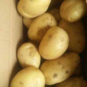 Exported Quality Fresh Holand Potato pictures & photos