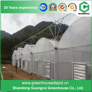 Vegetables/Garden/Flowers/Farm Multi Span Film Green House pictures & photos