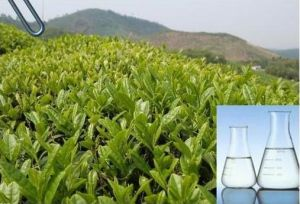 40% Tea Tree Essential Oil Used as Food Additives