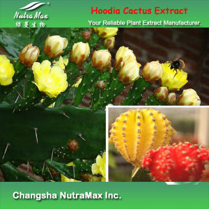 100% Natural Hoodia Cactus Extract (4: 1~20: 1 by TLC)