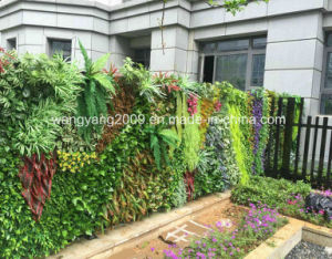 Fake Synthetic Artificial Evergreen Wall pictures & photos