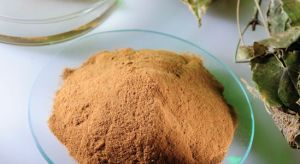 Ex-Stock Herb Medicine Horny Goat Weed Extract Powder pictures & photos