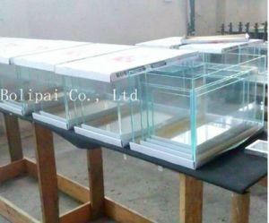 High Quality Glass Ocean Aquarium pictures & photos
